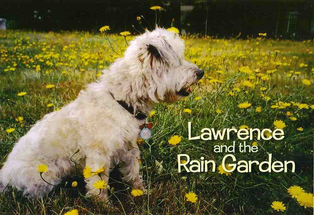 Lawrence and the Rain Garden